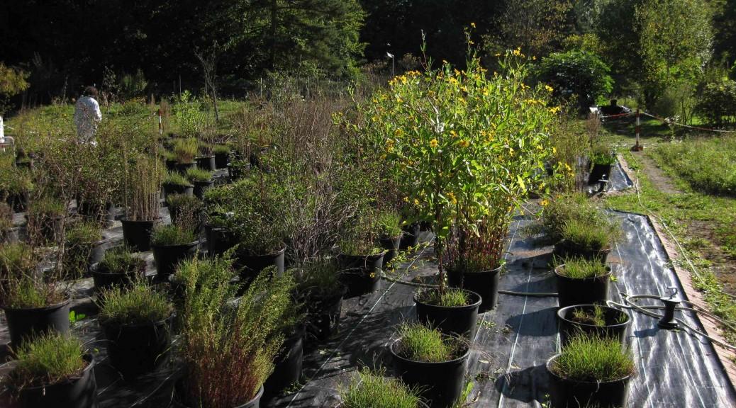 Botanischer Garten der Universität Konstanz