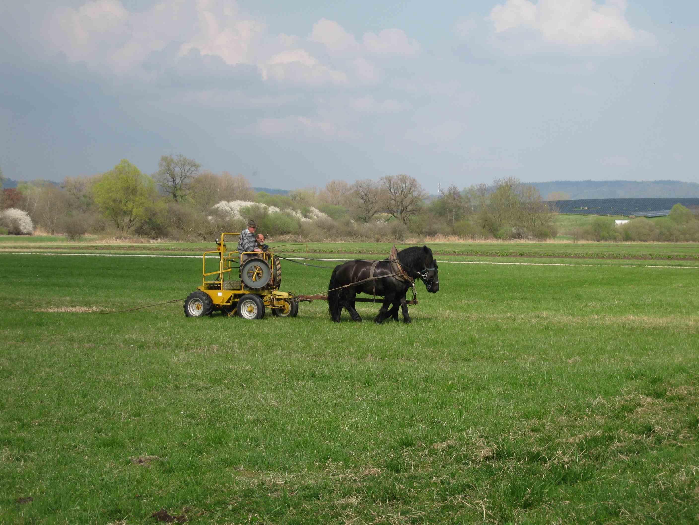 Probefahrt beim Pferdehof Weltin in Überlingen am Ried bei Singen